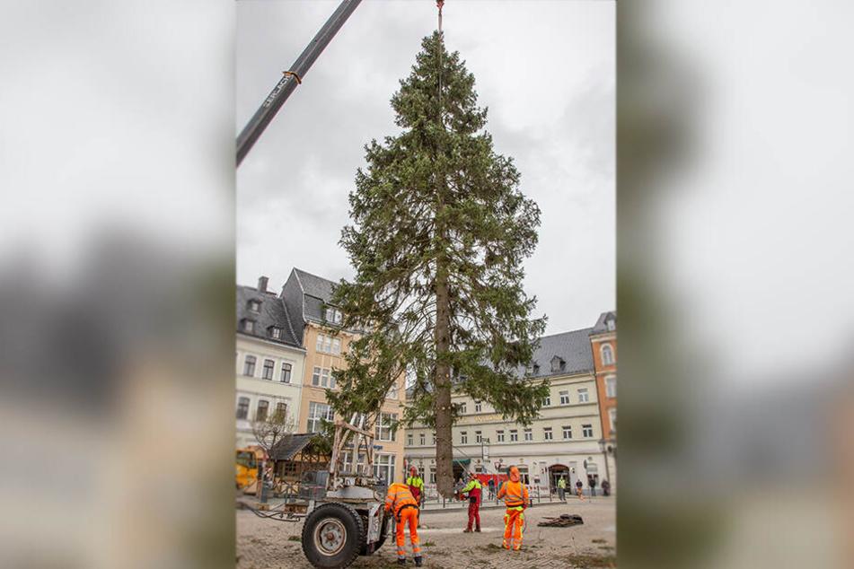 Geschafft, der Weihnachtsbaum ist auf dem Annaberger Markt angekommen.