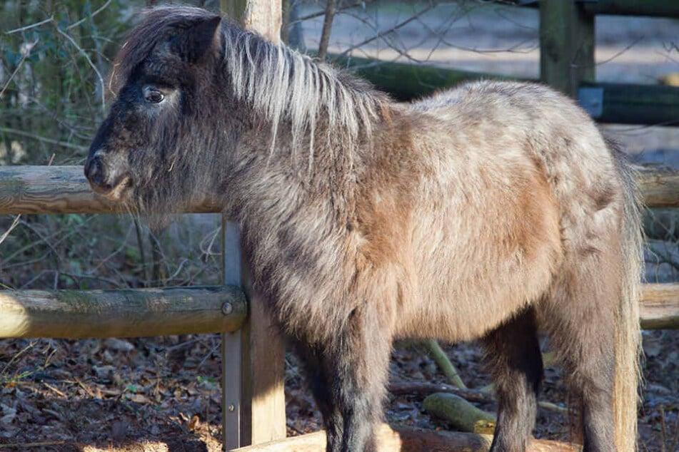 Mann soll sich in Berlin an Pony sexuell vergangen haben