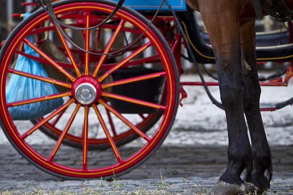 Wie die Pferde den Unfall überstanden, ist unklar (Symbolbild).