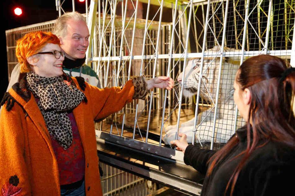 André Sarrasani zeigt TAG24-Reporterin Katrin Koch, wie sehr sich Kijana  schon an den Showkäfig gewöhnt hat.