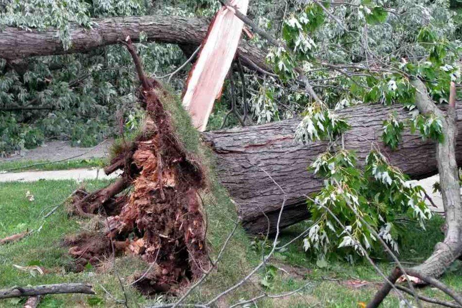 Umgestürzter Baum verletzt Familie im Freibad