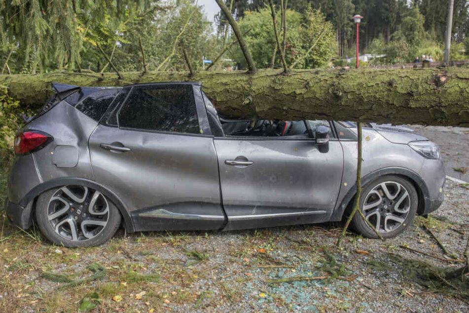 In Zwönitz stürzte ein Baum auf einen Pkw.