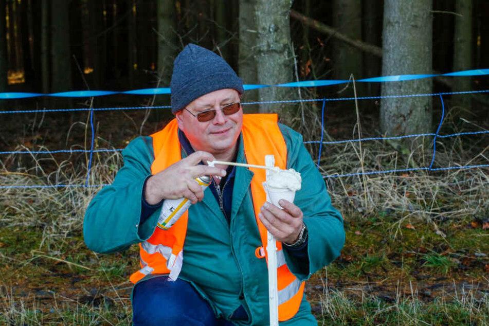 Tierarzt Norbert Bialek (51) trägt die müffelnde Duftkomponente auf. Sie soll Wildschweine abhalten.
