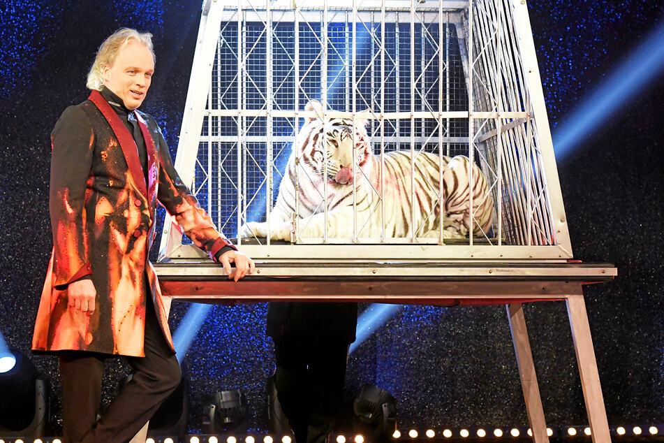 Ab und an nimmt Magier André Sarrasani (47) Kaya mit auf die Bühne - oft im Käfig gesichert.
