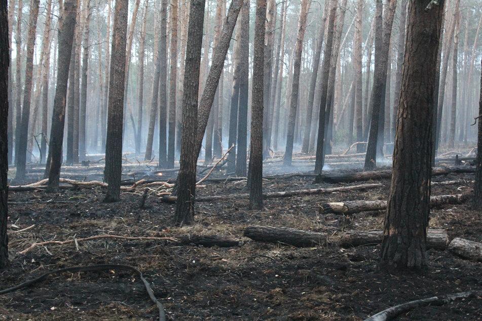 Etwa 30 Hektar Waldfläche standen in Flammen.