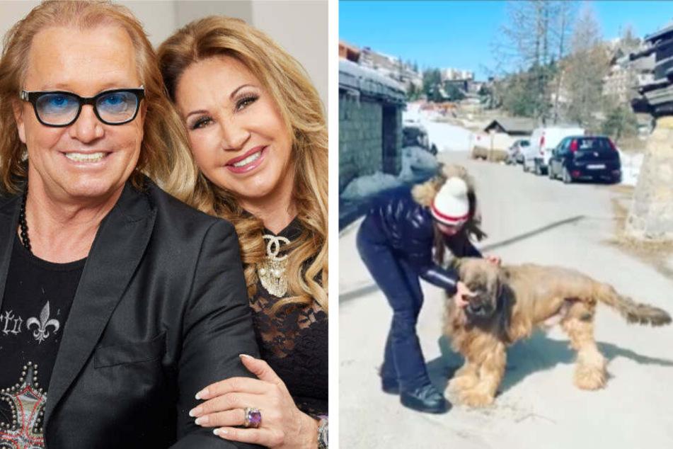 Robert und Carmen Geiss (li.) freuen sich: Familien-Hund Dex kann nach seiner Bein-Amputation wieder mit Shania herumtollen (re.).
