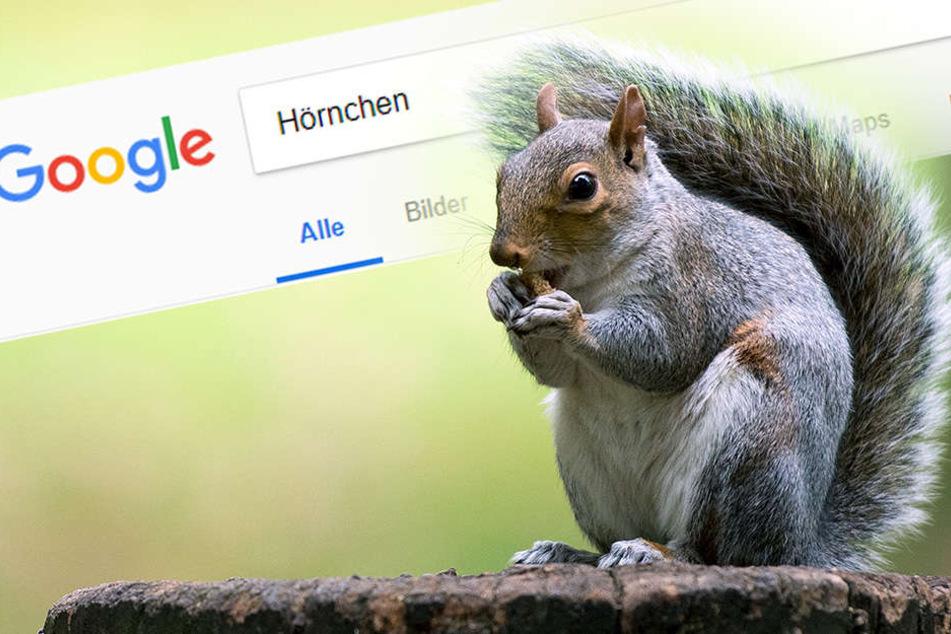 """Das passiert, wenn Ihr bei Google nach """"Hörnchen"""" sucht"""