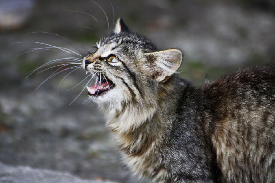 Die ausgesetzten Katzen sind nun im Tierheim. (Symbolbild)