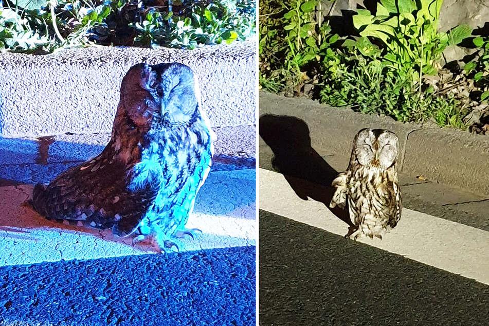 Der Vogel stand in Schockstarre einfach an der Straße und wartete auf Hilfe.