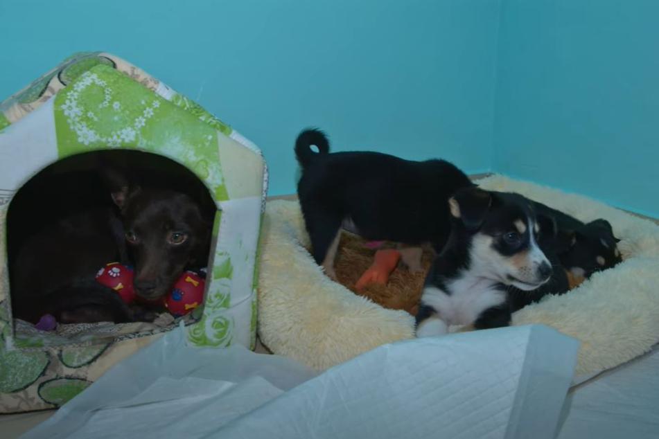 In Sicherheit: Die Hunde in den Räumlichkeiten der Love Furry Friends.