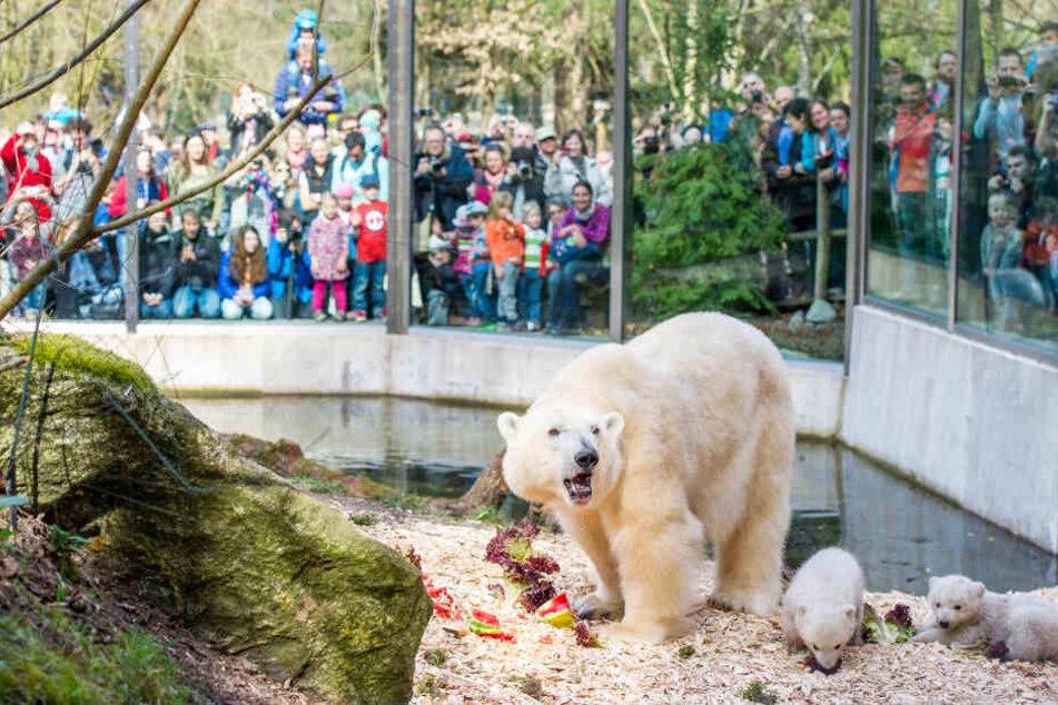 Der Tierpark Hellabrunn zieht sehr viele Besucher als ganz Deutschland an.