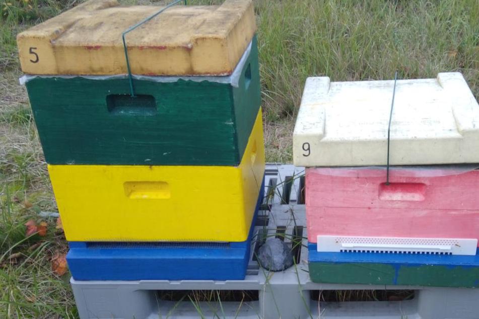Bienenvolk in der Oberlausitz gestohlen: Polizei sucht nach Zeugen