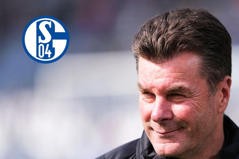 FC Schalke 04 auf Trainersuche: Er ist der Top-Kandidat!