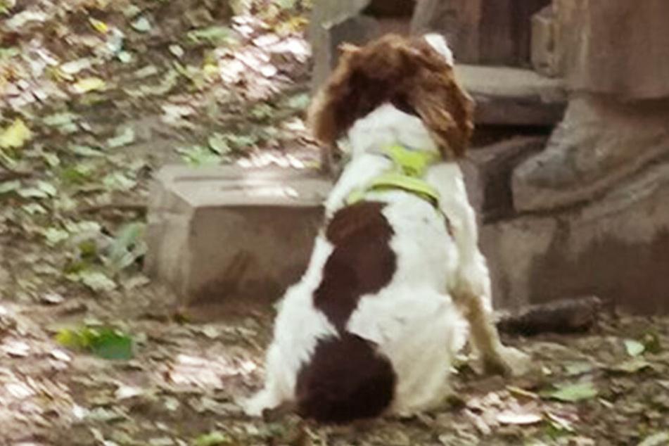 Es ist so rührend, wie dieser Hund auf ein Denkmal reinfällt