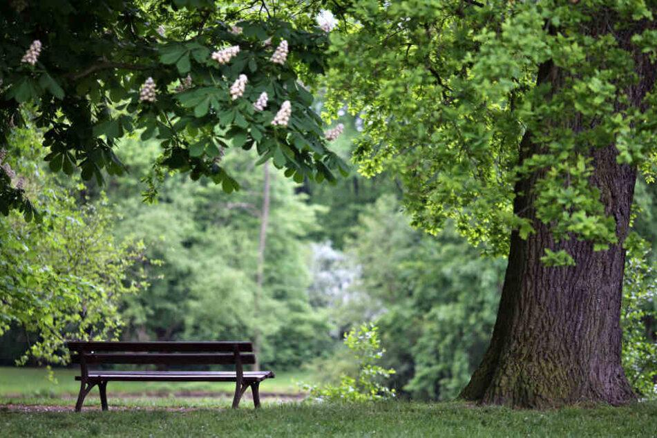 Der Mann saß auf einer Parkbank. (Symbolbild)