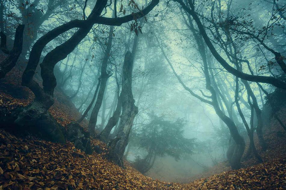 Schauerfund: Die Leiche wurde in einem Waldstück entdeckt. (symbolbild)