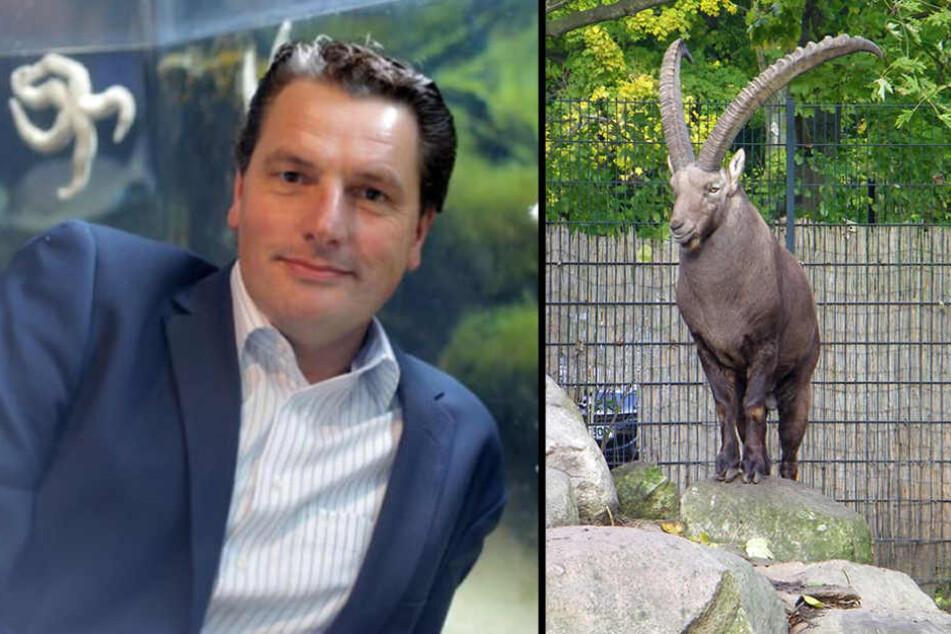 Zoo-Chef Eugene Bruins (48) machte sich selbst ein Bild. Der Steinbock wurde bereits im September verkauft.