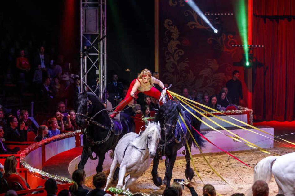 Respekt! Circus-Reiterin Sarah Berousek hat ihre Pferde voll im Griff.