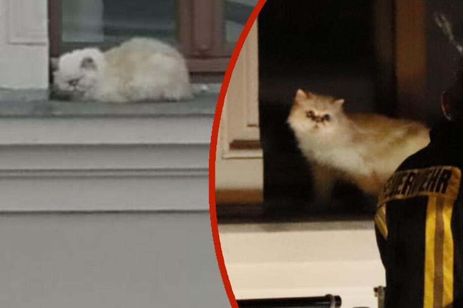 Katze in Leipzig erst nach 15 Stunden und drei Alarmierungen aus viertem Stock gerettet