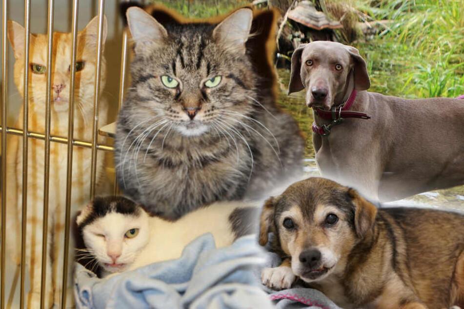 5 besondere Tiere: Diese Hunde und Katzen sind alles andere als gewöhnlich