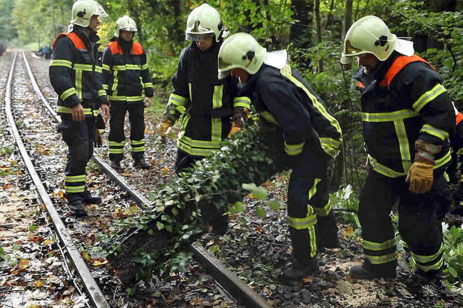 Die Freiwillige Feuerwehr Radebeul zerlegte den Baum.