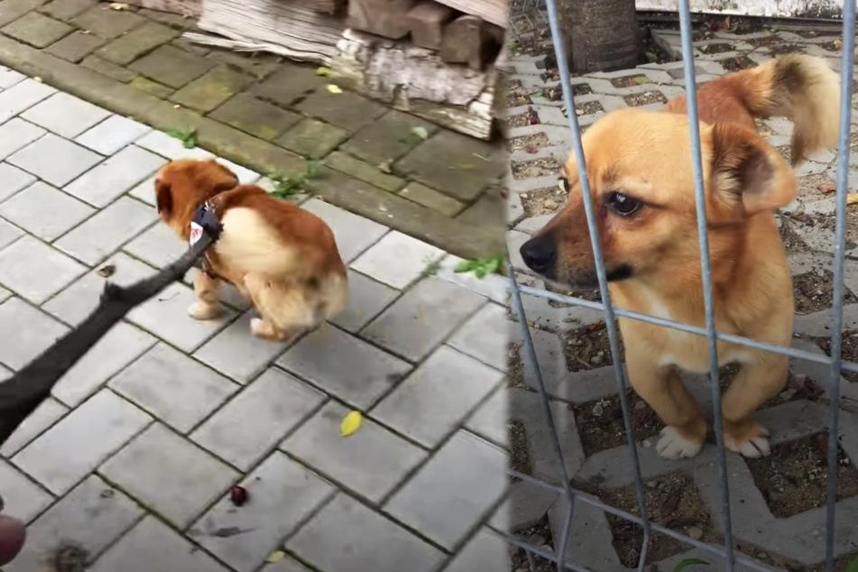 Tycho wurde von Solca gerettet und konnte bald wieder normal laufen.