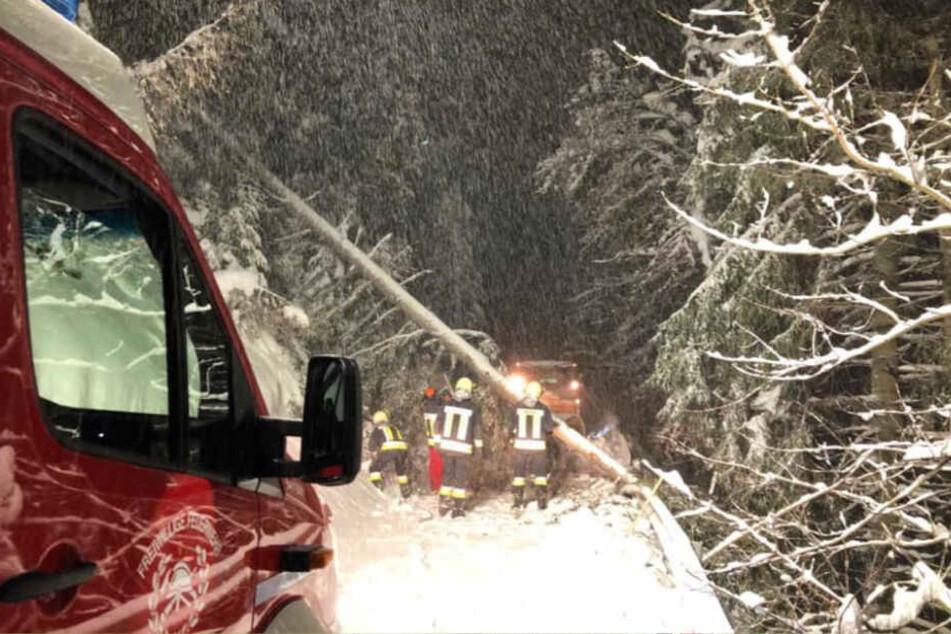 Die Freiwilligen Feuerwehren Südtirol müssen etliche umgestürzte Bäume von den Straßen räumen.