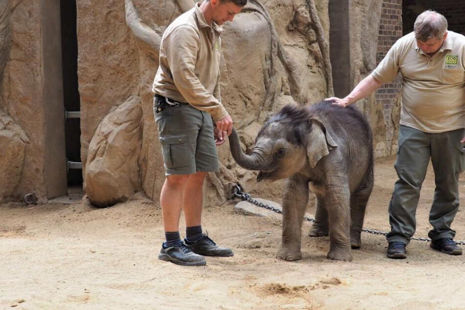 Zoo Leipzig: So geht es dem Elefanten-Baby nach der schwierigen Nabel-OP