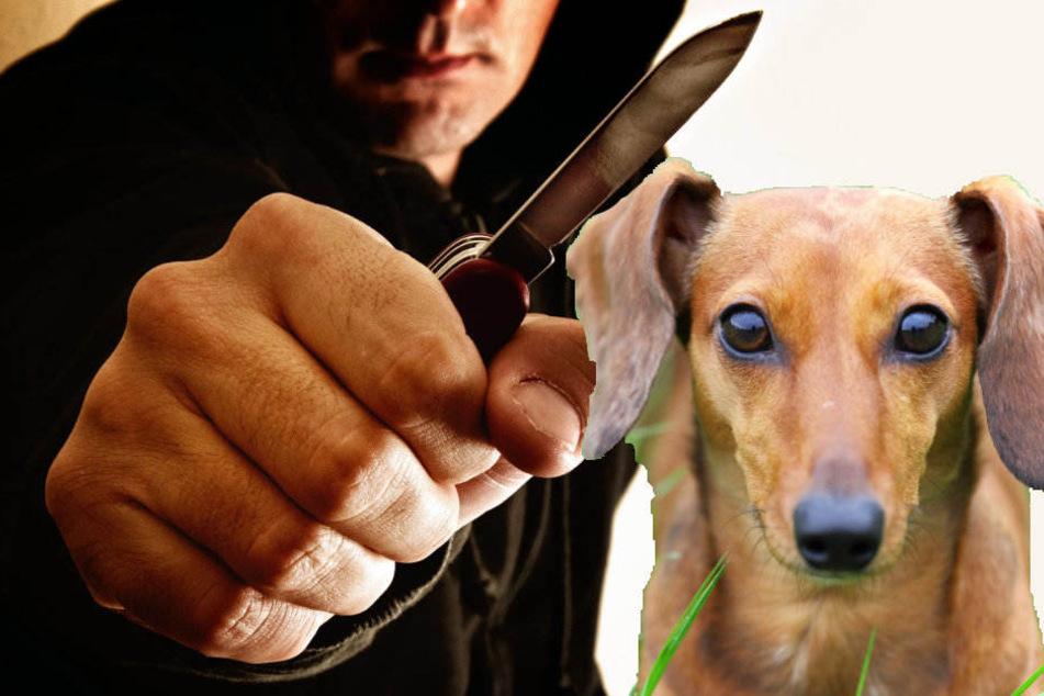 Plötzlich zückte der Hundehalter ein Klappmesser. (Symbolbild)