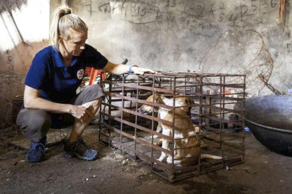 """Eine Tierschützerin der """"Vier Pfoten""""-Organisation rettet einen Hund vom Schlachthof."""