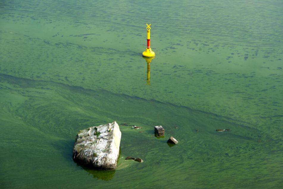 Ein Blaualgen-Teppich hat sich in der Ostsee ausgebreitet.