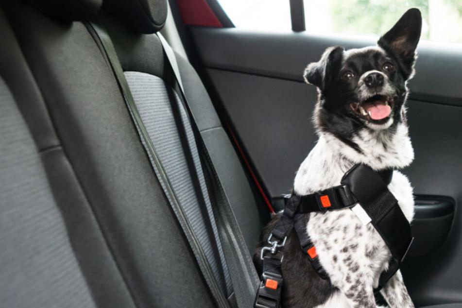 Mehr drin, als die Diebe glaubten: Auto mit Hund geklaut