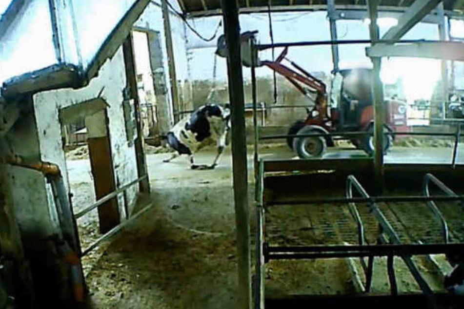 Horror in Allgäuer Milchbetrieb: Behörde sieht von Schließung ab