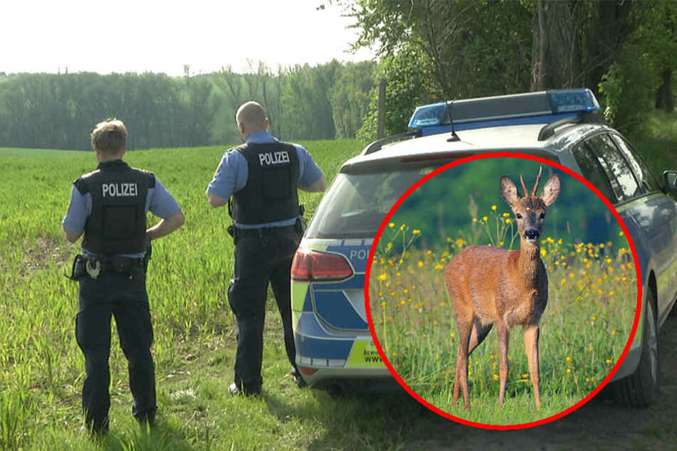 Jäger starb nach Kampf mit angeschossenem Rehbock