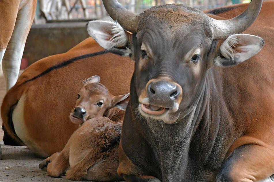 Der kleine Björn schaut - geschützt von seiner Mama - schon ganz kess ins Leben.