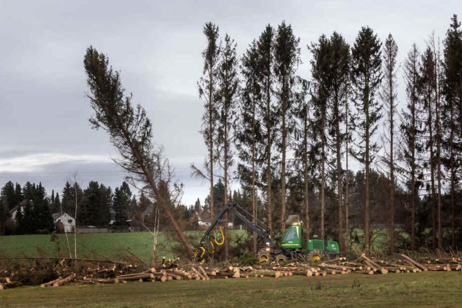Chemnitz: Trotz Protesten: Wäldchen in Adelsberg wird abgeholzt