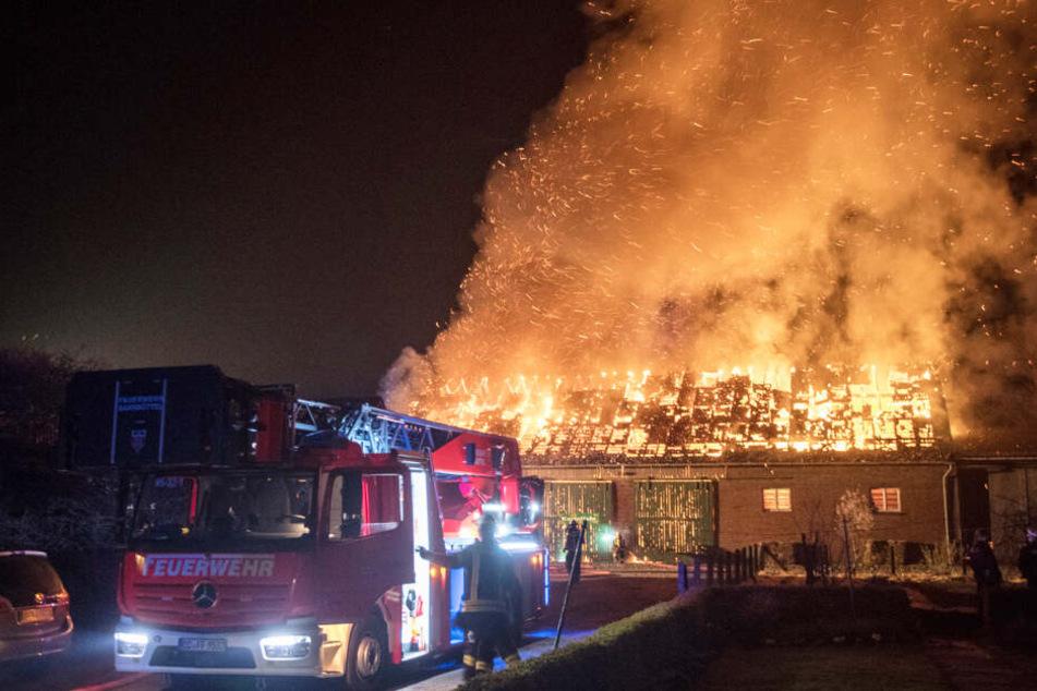 Flammen schlagen meterhoch aus der brennenden Scheune.