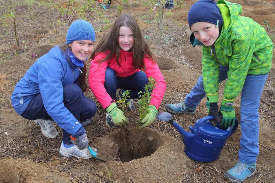 Auch Anna (12, v. l.), Klara (12) und Simon (11) waren dabei: Rund 120 Schüler des Evangelischen Kreuzgymnasiums pflanzten in Dölzschen Sträucher und Bäume ein.