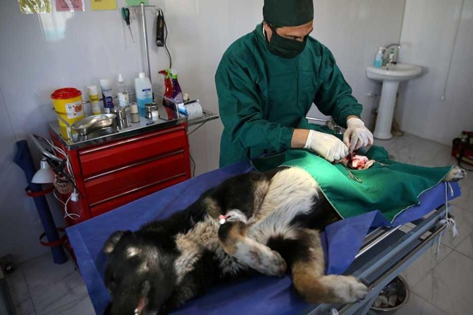 Kassierte falscher Tierarzt jahrelang seine Patienten ab?
