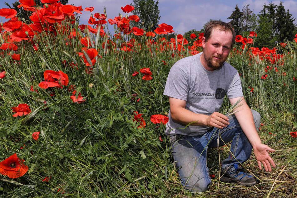 Mohnblumen-Pracht auf seinem Biofeld: Bauer sauer auf rücksichtslose Foto-Fans