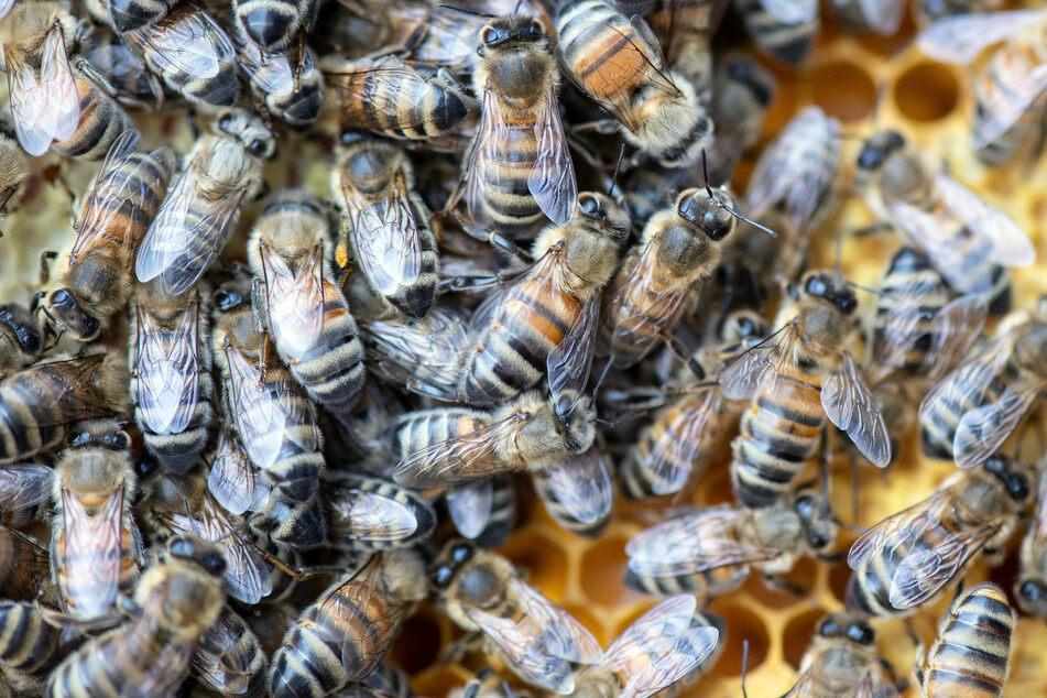 Stiche in Kopf und Oberkörper: Frau von Bienenschwarm angegriffen