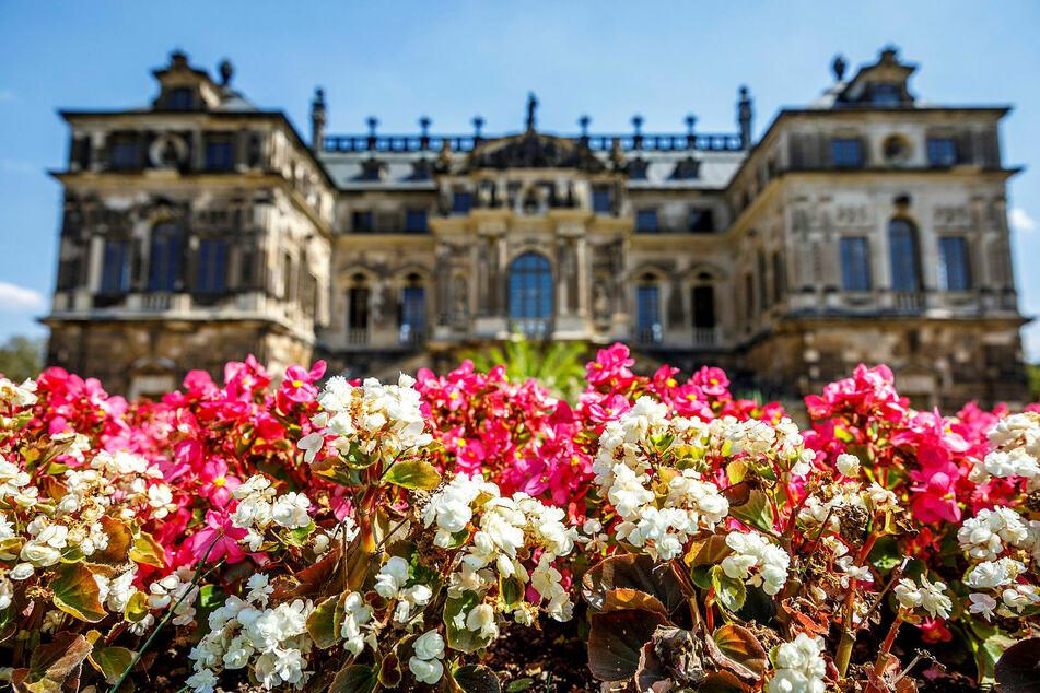 Vor dem Palais im Großen Garten in Dresden stehen trockene Blumen. Ob im Sommer sachsenweit neu gepflanzt werden kann, ist noch unklar. (Archivbild)