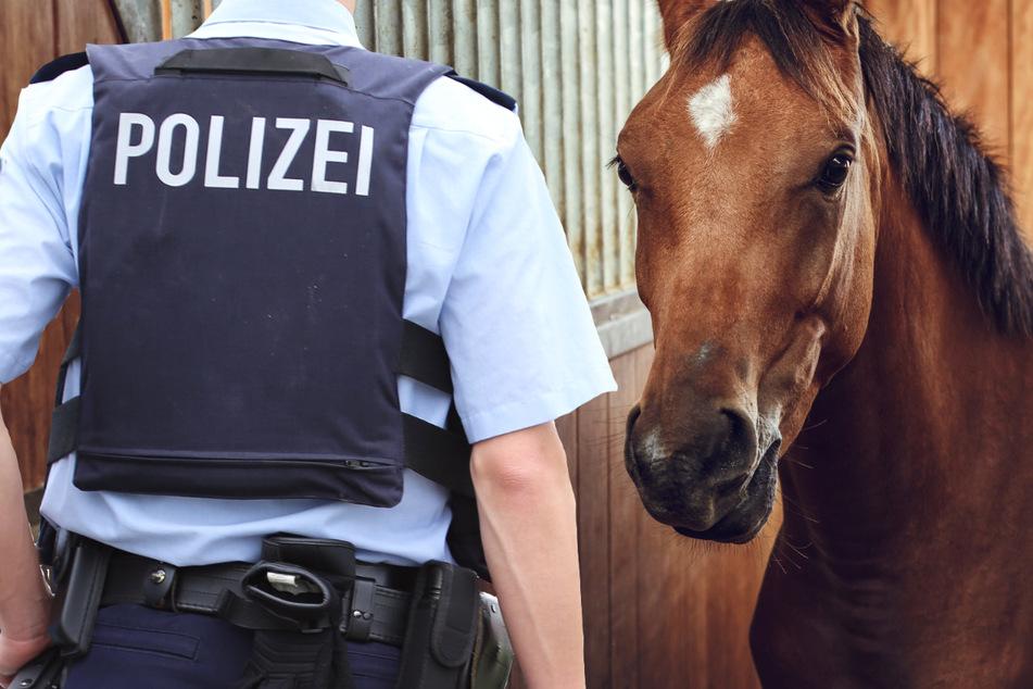 36-Jähriger wird im Stall erwischt: Hat er ein Pony sexuell missbraucht?