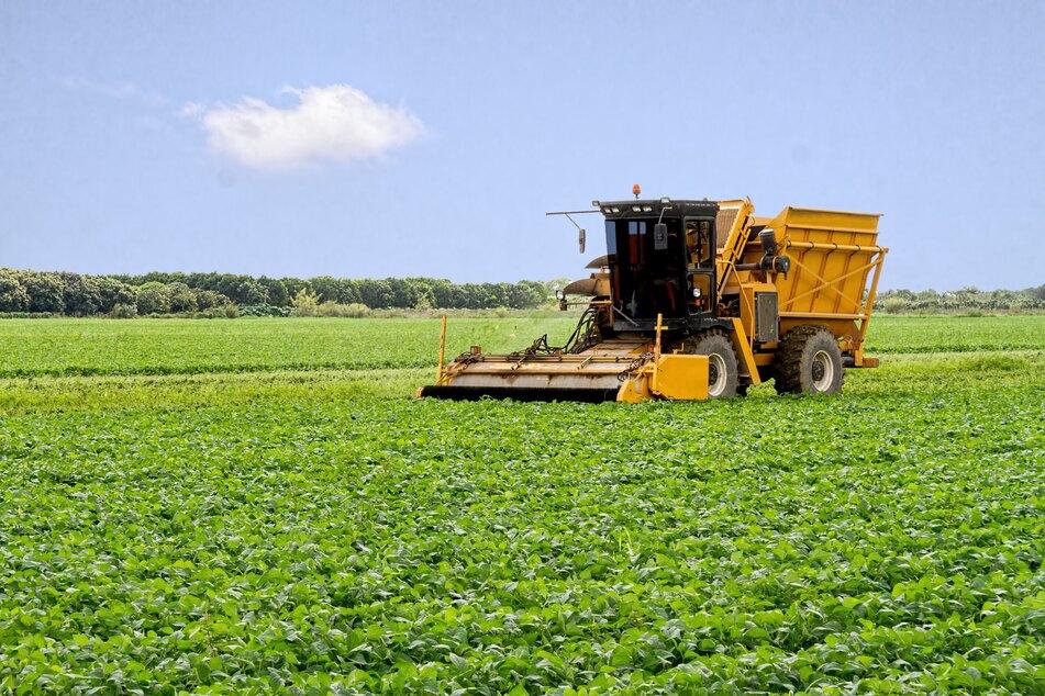 Landwirt macht schreckliche Entdeckung in Weizenfeld
