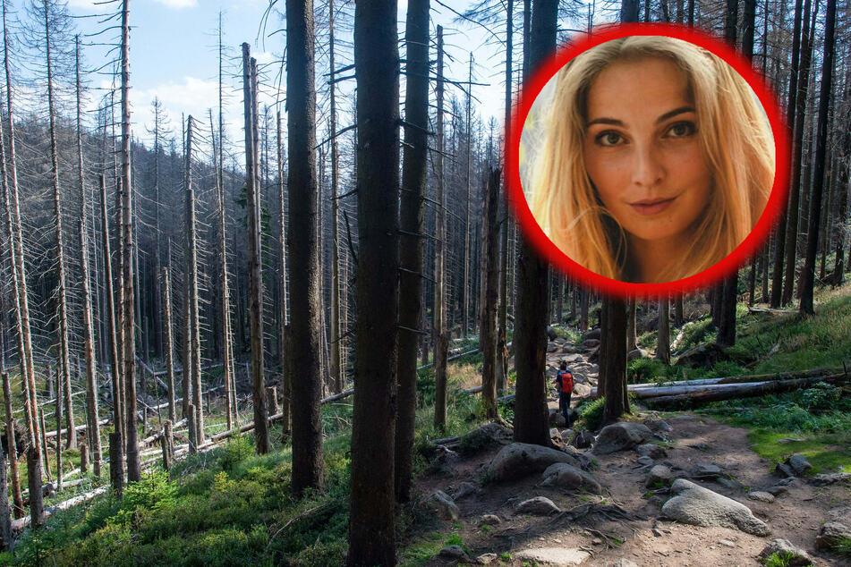 Darum geht es Deutschlands Wäldern so schlecht