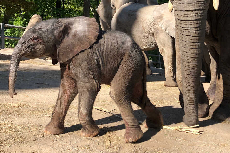 Elefantenbaby Wuppertal