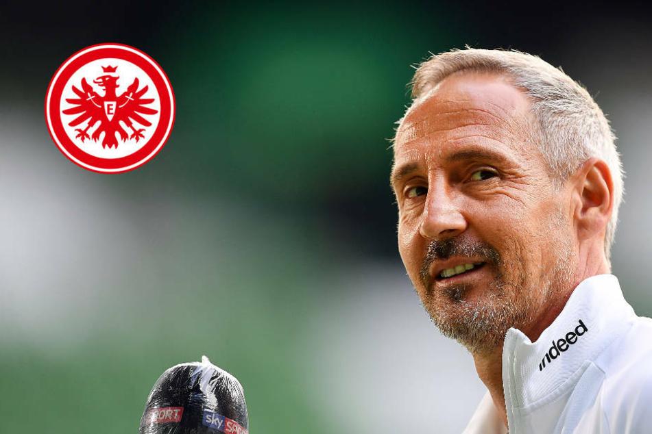 Eintracht Frankfurt verlängert mit Trainer Adi Hütter