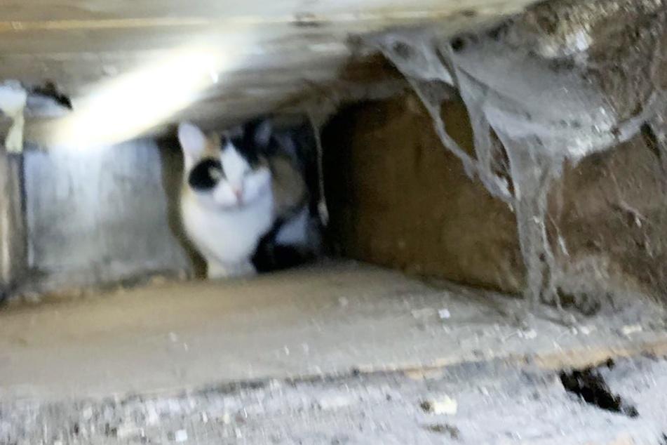 Mehrere Wochen verschwunden: Katze aus Hohlraum in Wand gerettet!
