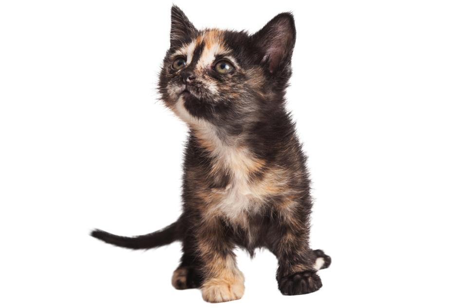 Die Frau soll ihr zwölf Wochen altes Kätzchen vom Balkon geworfen haben. (Symbolbild)