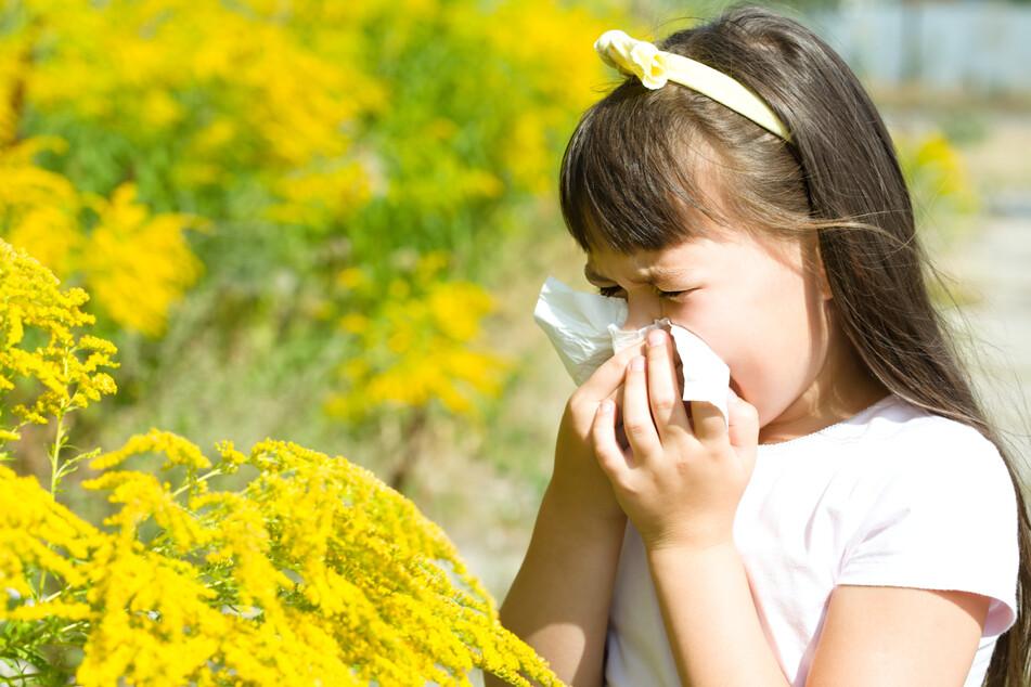 Liegt etwa eine Allergie gegen Birkenpollen vor, besteht das Risiko, auch auf Apfel, Haselnuss oder Soja allergisch zu reagieren. (Symbolbild)